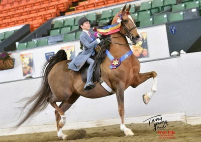 Maya Tasch WCC CH Extremely Fortunut, nehc member on horse